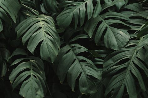 Download Tropical Green Leaves Background For Free Latar