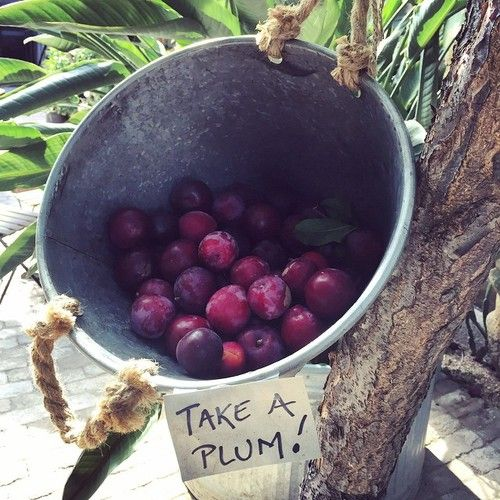 aplat - Love this take a plum tree @lilabdesign @stablecafe #plumtree #lilabesign