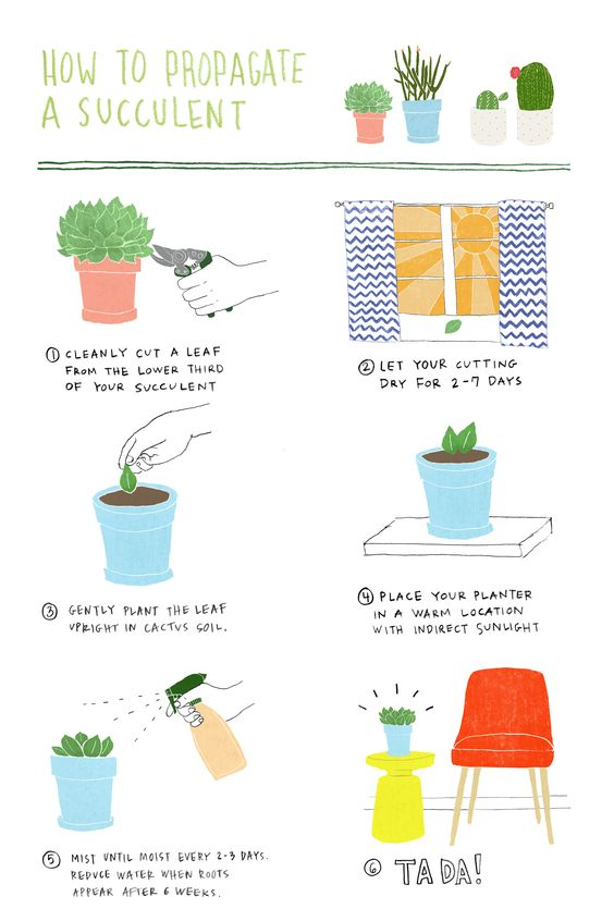 How to produce a NEW succulent from a cutting