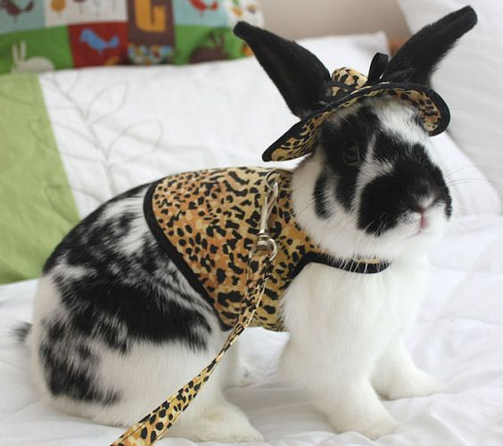 Bunny Leopard harness ,hat and matching leash . Made to order ...
