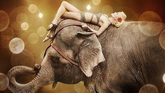 087291-water-for-elephants.jpg (650×366) @sadierue61