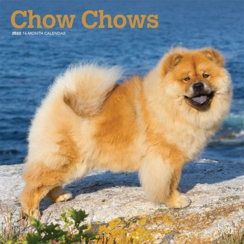 Chow Chows 2020 Calendar Originally Bred In China To Be Hunting
