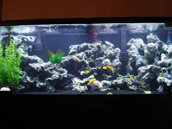 Fresh water tank with black gravel animals pinterest for Fish tank pebbles