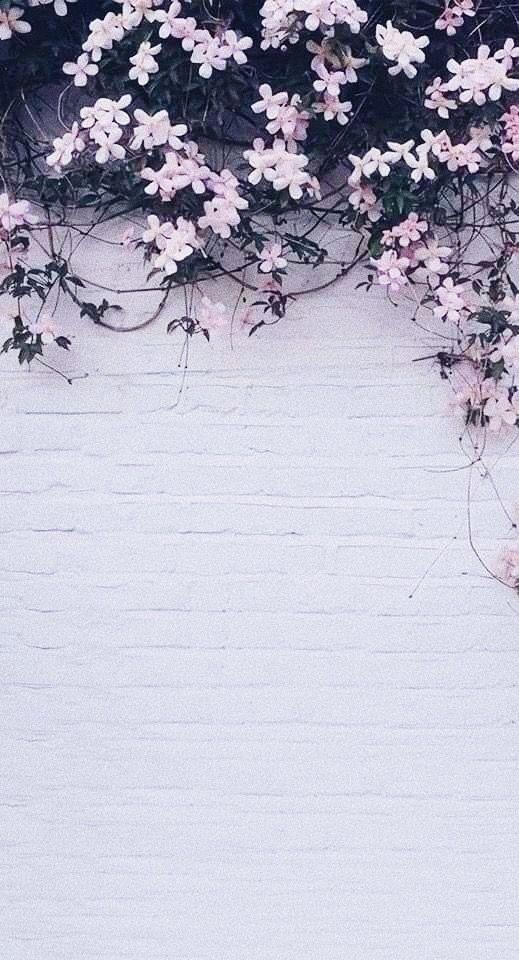 Wallpaper Flowers Iphone Flower Background Wallpaper Cute Wallpaper Backgrounds Phone Screen Wallpaper