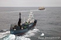 "Sea Shepherd Has ""Shut Down"" Japan's Whale Hunt"