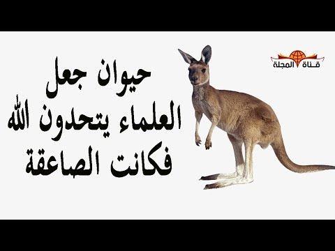 حيوان لا يشرب الماء ويموت اذا شربه والقرا ن يقول وجعلنا من الماء كل شئ حي فجاء الرد من داخلهم Youtube Animals Kangaroo Avl