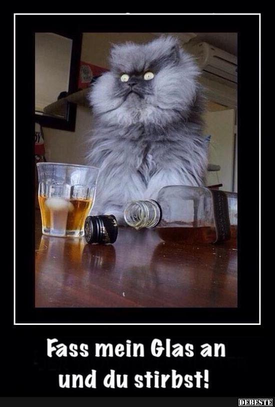 Beruhre Mein Glas Und Du Wirst Sterben Seltsame Katzen Lustige