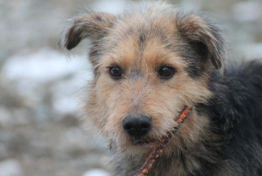 Tokana Aus Lohra Reimershausen Sucht Ein Neues Zuhause Hunde Tierheim Tiere