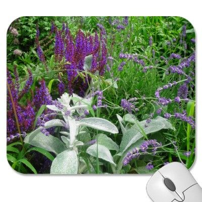 Salvia, Lambs ear and Lavendar  Garden full of #Purple Salvia, Lavender and Lambs Ear make a pretty floral Mousepad