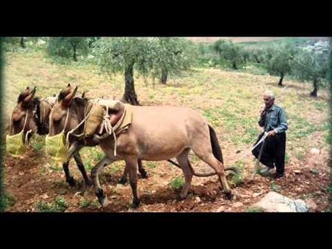 مدونة جبل عاملة هوارة جنوبية Horses Blog Animals