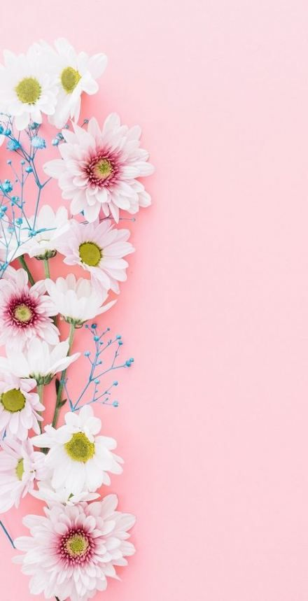 52 Ideas Flowers Background Wallpapers Pink Wall Papers For 2019 Flower Background Wallpaper Flower Wallpaper Pink Wallpaper Iphone Flower wallpaper pink background