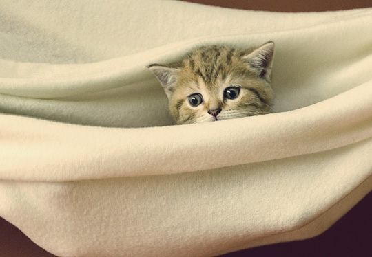 Eldorado by Gintarė P.: 100 Cats, Cats Cats Cats, Adore Animals, Cats Dogs, Animals Cats, Animals Baby Animals, Cats Love