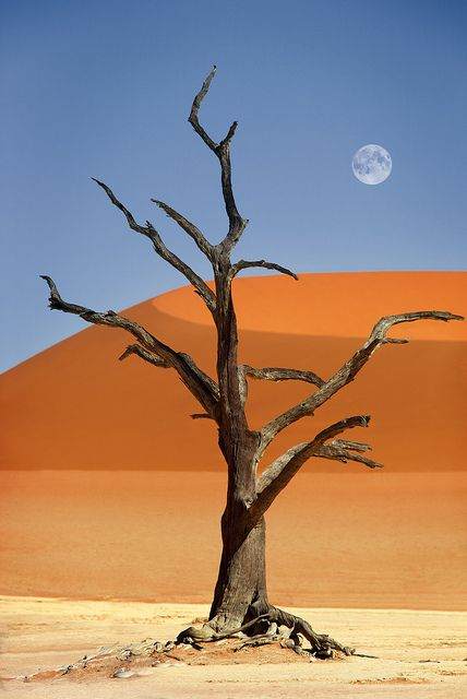 Namibia, Sossusvlei, Deadvlei by Dietmar Temps, via Flickr