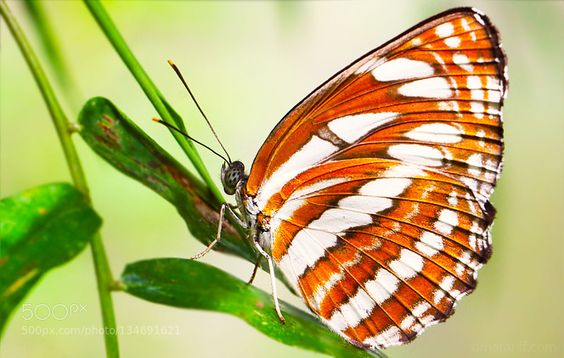 Butterfly by omarariff65