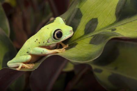 Pin Von Chumani On Tree Auf Frogs 2020