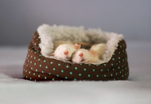 Two in a bed / Flickr - Photo Sharing!