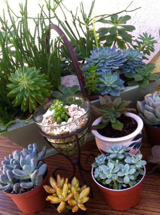 I love succulents!