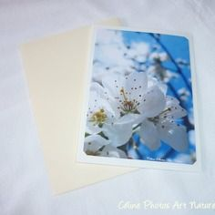 """Carte double 10,5x15cm réalisée à partir d'une photo de fleurs de ceriser """" fleurs de cerisier"""""""