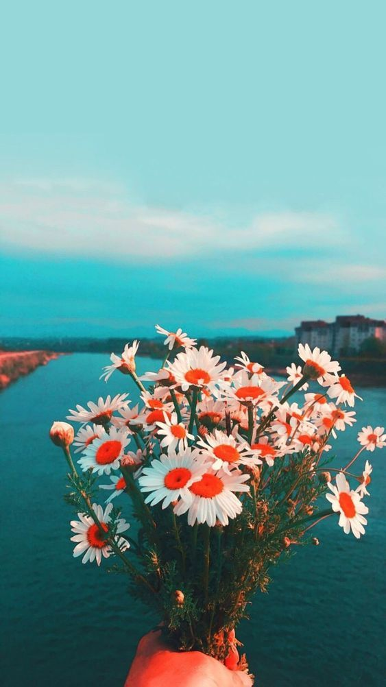 55 Elegant Phone Wallpapers You Will Like Page 20 Of 200 In 2020 With Images Landscape Wallpaper Daisy Wallpaper Floral Wallpaper Phone