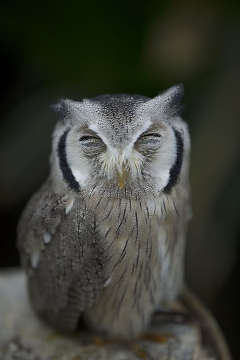 Happiness Owl