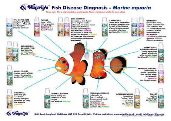 A helpful chart for diagnosing fish illness aquarium for Tropical fish temperature chart