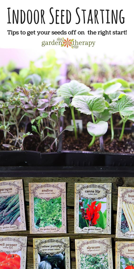 seed starting is a fun early season gardening project it takes up a