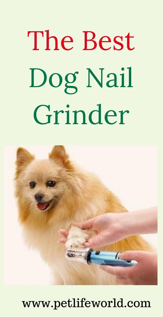 Top 5 Best Dog Nail Grinders Reviews Updated 2020 Buyer S