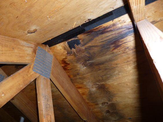 Roof Ridge Vent Leak Causes Decay Building Defect