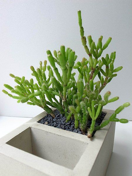雙格水泥花器名片台(不含植物、石、土) - 設計師品牌 goodmore - Pinkoi
