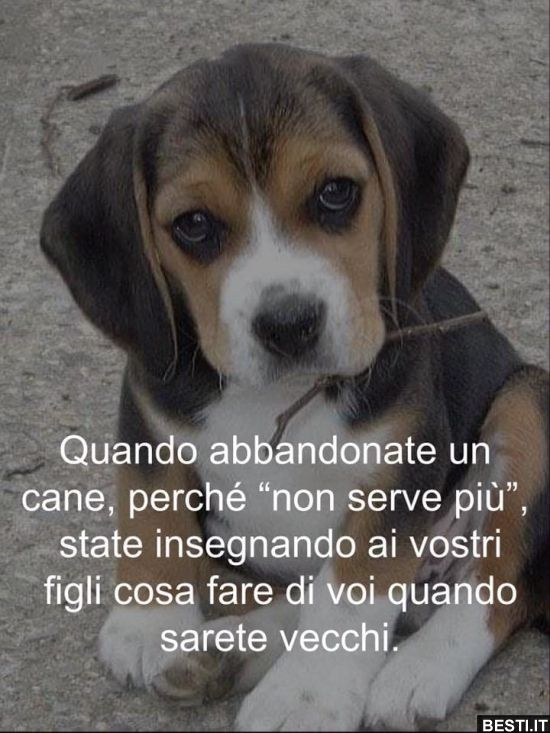 Quando abbandonate un cane.. | BESTI.it - immagini divertenti, foto,  barzellette, vi… | Citazioni sui cani, Citazioni su animali divertenti,  Citazioni sugli animali