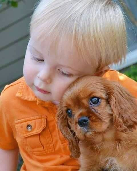 Top 10 Most Small Dog Breeds In The World Dogs And Kids Cute