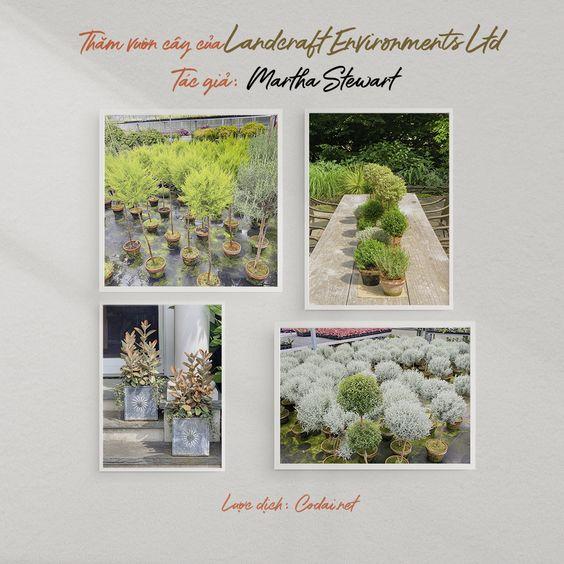 Thăm vườn cây tuyệt đẹp của Visiting Landcraft Environments Ltd. (Martha Stewart)