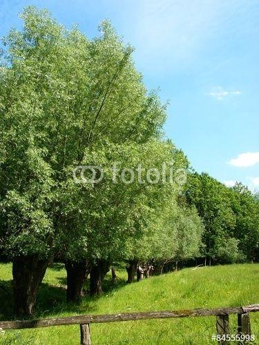Baumreihe am Grütebach zwischen Oerlinghausen und Asemissen in Ostwestfalen-Lippe