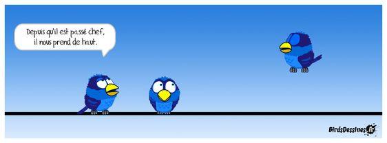 Épinglé sur oiseaux