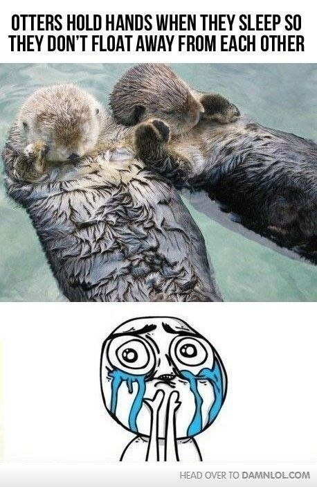 otters hold hands when sleeping (I seriously hope this is a true fact, how adorable!)