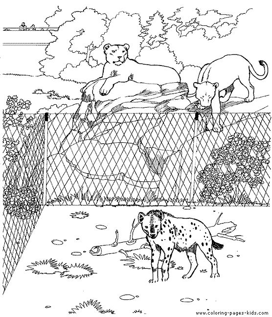 Lions And A Hyena At The Zoo Coloring Sheet For Kids Zoo Animal