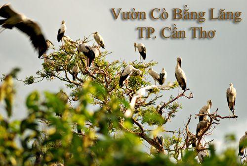 vuon-co-bang-lang-can-tho-vuon-chim-rong-lon
