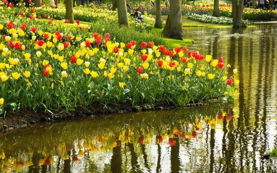 Tulpenliebhaberei in den Niederlanden, Keukenhof