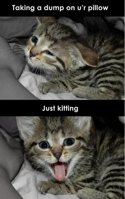 Scumbag kitteh.