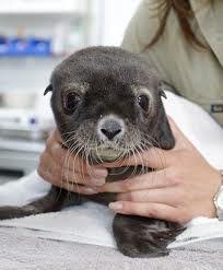 sea lions are cute!