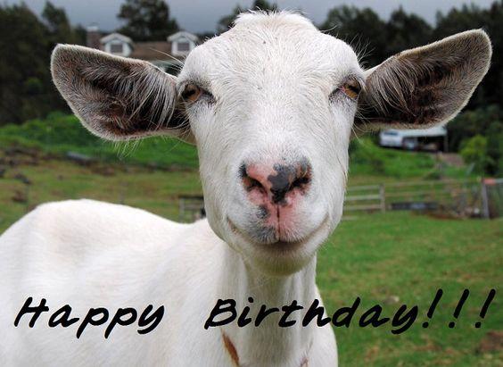 Happy birthday, Goats and Happy on Pinterest