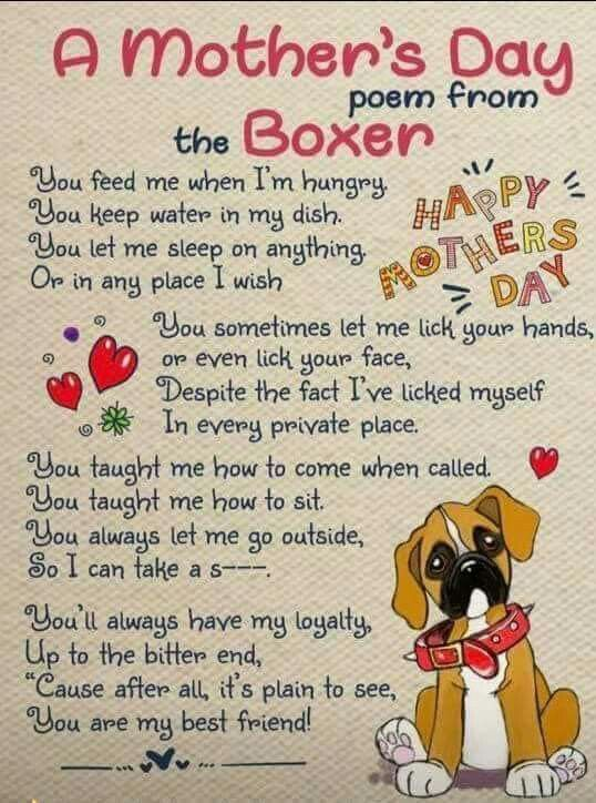A Mother S Day Poem From The Boxer Boxer Boxerlove Poetry Bestfriends Bff Happymothersday Boxer Dog Quotes Boxer Dogs Funny Boxer Dogs Training