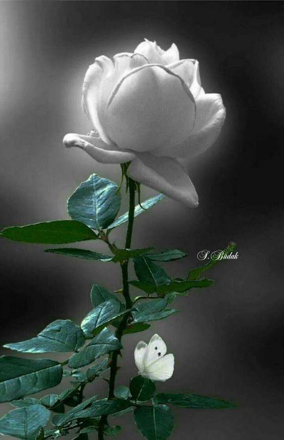 Te amo..una pequeña palabra que llena de felicidad A cualquier corazón !!