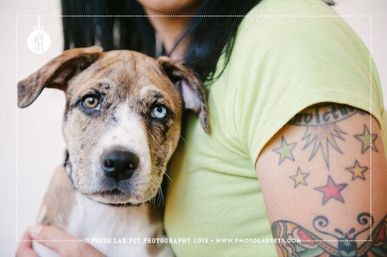 © Photo Lab Pet Photography