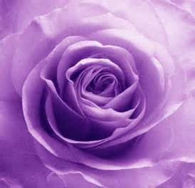 roses - Yahoo Search Results