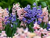 spring garden pictures - Yahoo Image Search Results