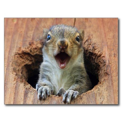Squirrel Haines hi res Post Card