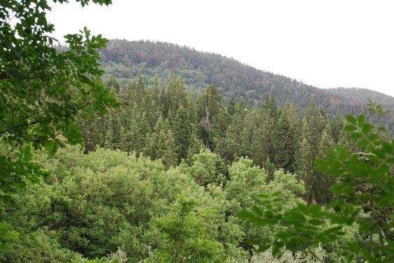 .. mismo aspecto que cualquier bosque de coníferas como los pinares e incluso abetales o pinsapares ¿qué opináis?