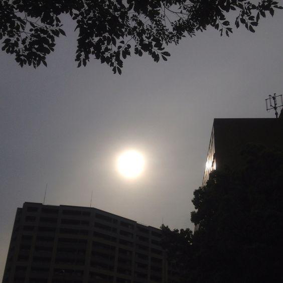 薄曇りなら太陽もしっかり撮影できる。明日朝は曇の予報。