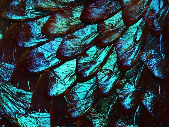 Butterfly wings under the microscope - Microscopy News Blog